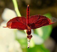 Red Ballerina-1 by myrbpix