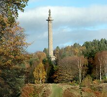Column of Liberty National Trust Property Gibside by Jackie Wilson