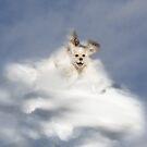 Angel Puppy by Halobrianna