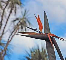 Bird of paradise not going to alight. by Bernard (Ben)  Bosmans
