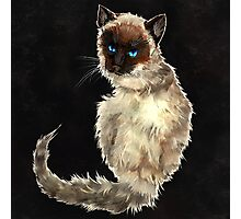 Siamese Kitty Photographic Print