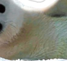 Seal Pup Waving Hello Tee Sticker