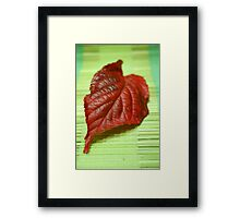 Blaze of colour Framed Print