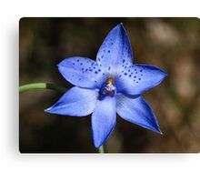 Dotted Sun-orchid (Thelymitra ixioides) Canvas Print