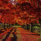 Driveway  by Dave Parrish