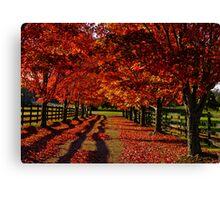 Driveway  Canvas Print