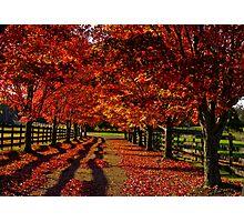 Driveway  Photographic Print