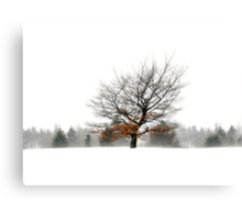 A Shade of Winter Canvas Print