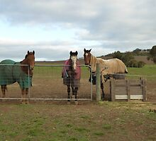 'THE THREE AMIGOS!' On the coldest first day of winter since 1987. by Rita Blom