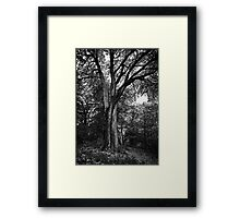 There's something about the woods Framed Print