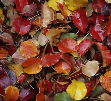 Wet Autumn Leaves by Adam Bykowski