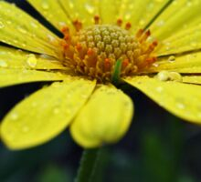 Raindrops on Daisy Sticker