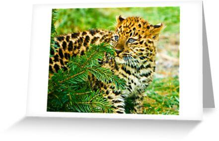 Amur Leopard Cub by Beverly Lussier