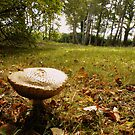 Fungi on the Forest Floor by Rob Parsons