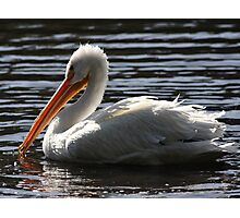 White Pelican Ripple Waters Photographic Print