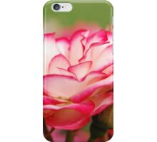 White Rose Edged with Red iPhone Case/Skin