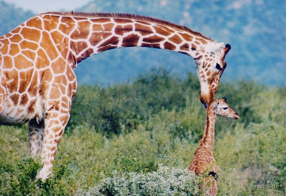 giraffe love by nicolette