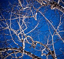 WInter birch branches against bright blue sky by Marie-Louise Avery