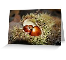 Chestnuts fallen from a tree Greeting Card