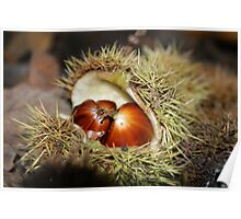 Chestnuts fallen from a tree Poster