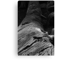 """Tough Twisted Tree"" Canvas Print"