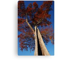 To the top Canvas Print