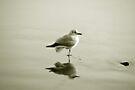 Bird reflection by Anne Staub