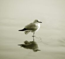 Bird reflection by Anne Staub