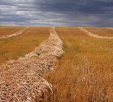 Stormy prairies  by zumi