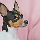 Australian Miniature Fox Terrier by Christine Till  @    CT-Graphics