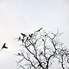 The Parrot Tree by STEPHANIE STENGEL   STELONATURE PHOTOGRAHY