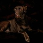 Labrador Retriever by Christine Till  @    CT-Graphics