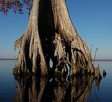 Lake Drummond Trees by Michele Conner