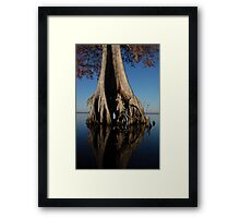Bald Cypress Framed Print