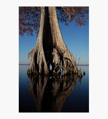 Bald Cypress Photographic Print