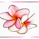 Plumeria on White by Teresa Zieba