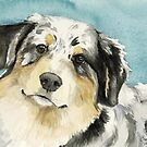 Australian Shepherd by Charlotte Yealey