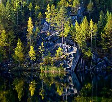 Taiga Forest Reflection by Karen Millard