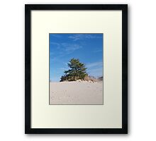 Dune top Pine Framed Print