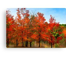 """"""" Blaze Red for Fall"""" #5 Canvas Print"""