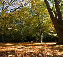 Carpet of Leaves by Nigel Bangert