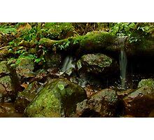 Tree root dam Photographic Print