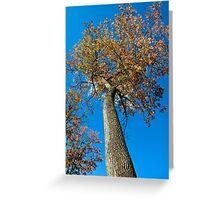 Climb This Tree Please! Greeting Card