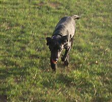 Fetch! by NowhereMan
