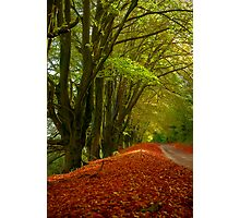 Country Lane in Autumn Photographic Print