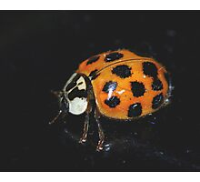 A Lady Bug in November... Photographic Print