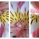 Lilium - Triptych by Kitsmumma