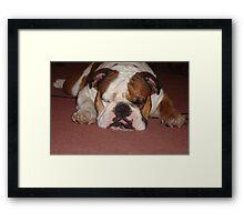 Mac Dog Framed Print
