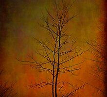 Wildfire by Steve Silverman