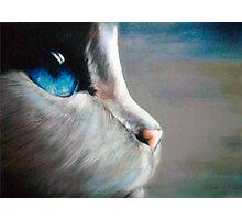 Blue Eyed Cat Photographic Print